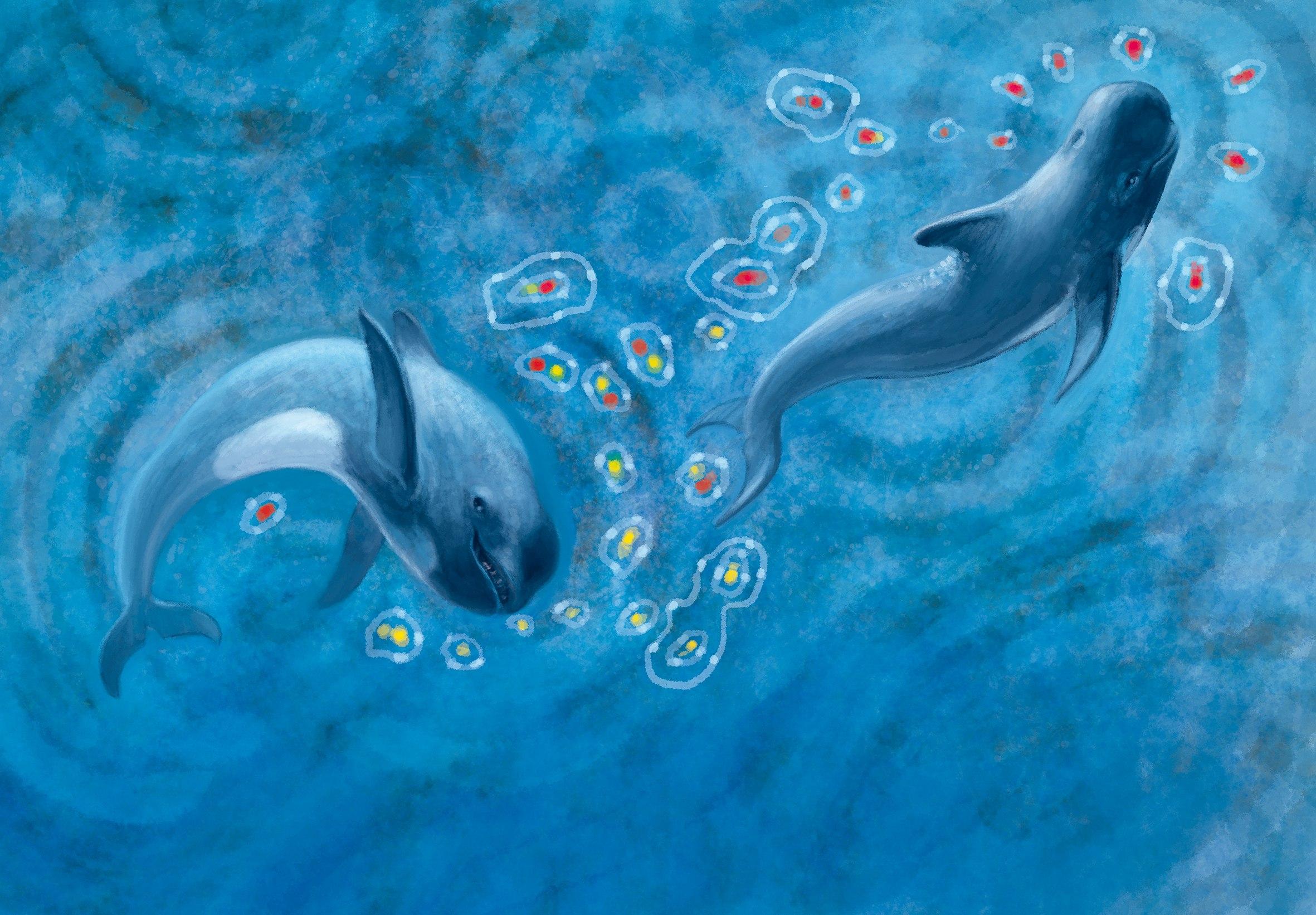 Читаем детям про отважных китов